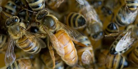 Queen-Latifah-bee