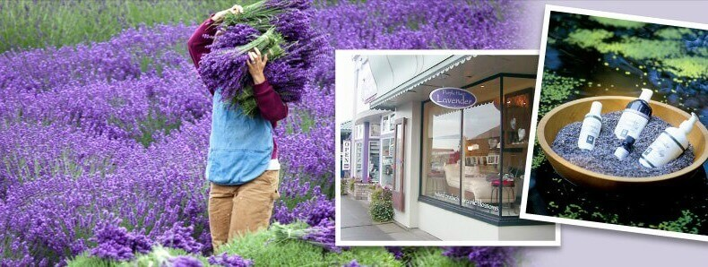 Purple Haze Lavender Farm 2