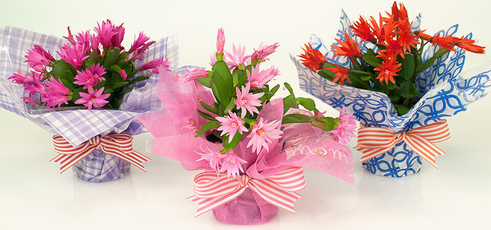 Tissue-Wrapped Flowers for Mother\'s Day | Nashville Wraps Blog