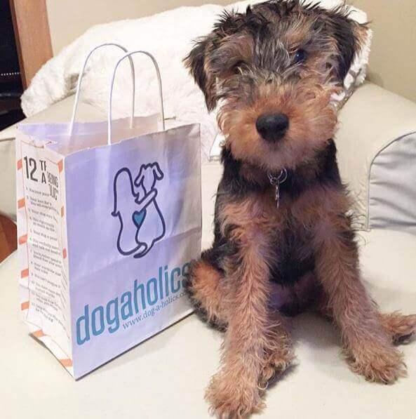 Dogaholics Custom Bags